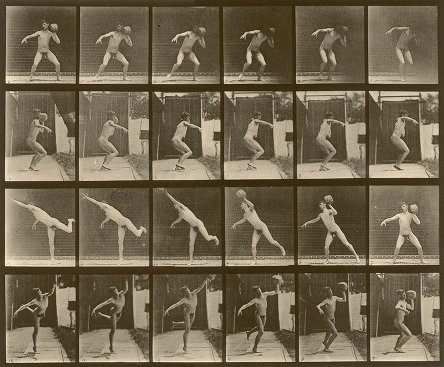 Muybridge Animal Locomotion, plate 315