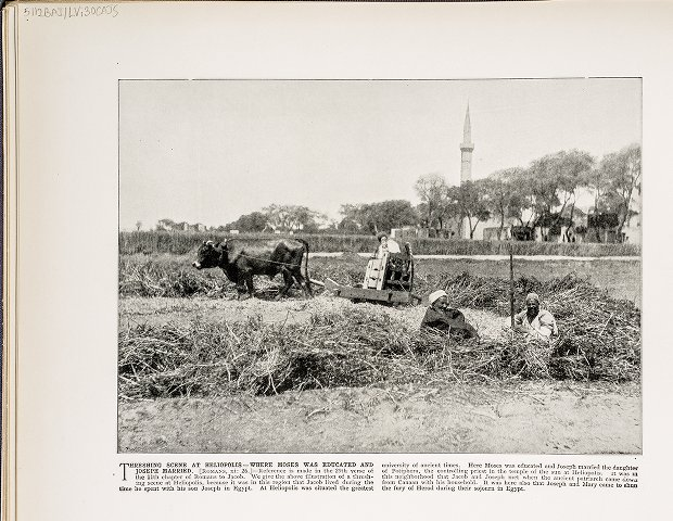 Threshing scene at Heliopolis--Where Moses was educated and Joseph married