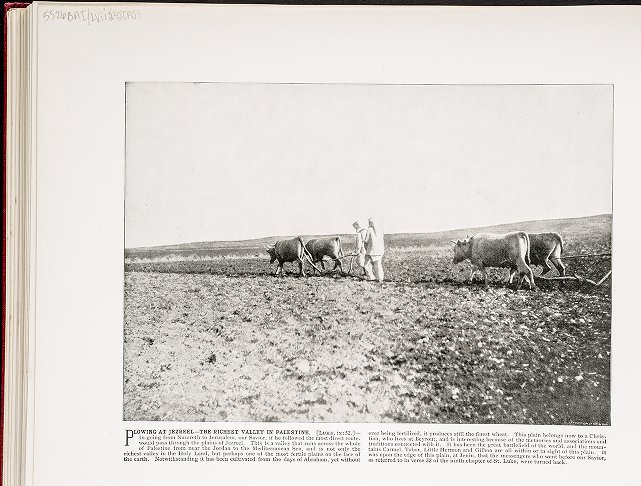 Plowing at Jezreel--The Richest Valley In Palestine