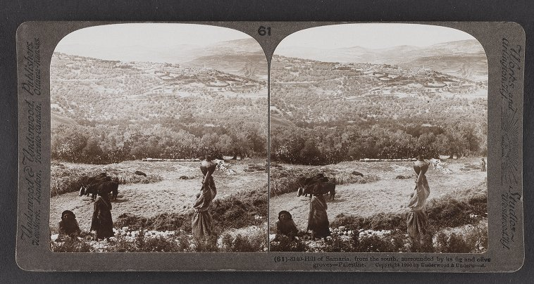 Hill of Samaria, from the south, surrounded by its fig and olive groves--Palestine